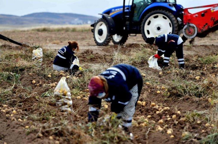 Ankara tarım.jpg