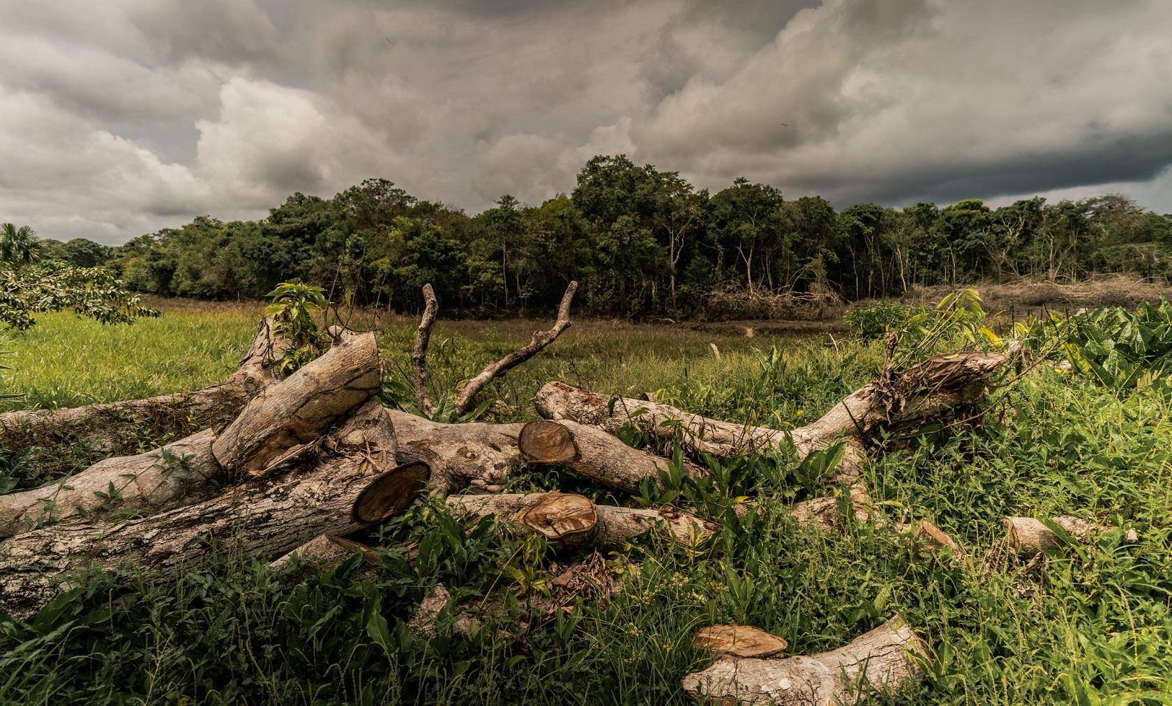 ormansızlaşma .jpg