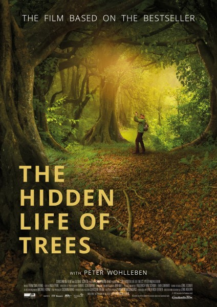 Das geheime Leben der Bäume.jpg
