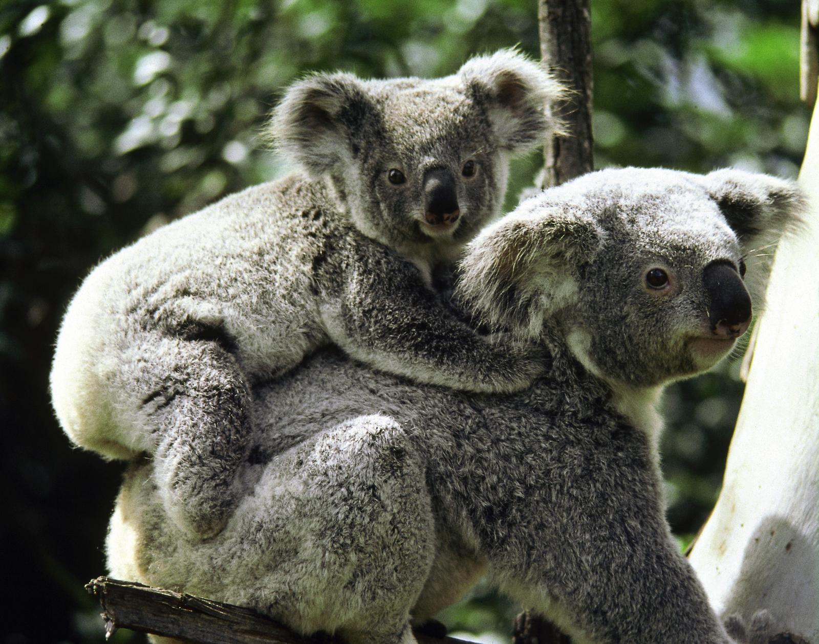 Vahşi Avustralya.jpg