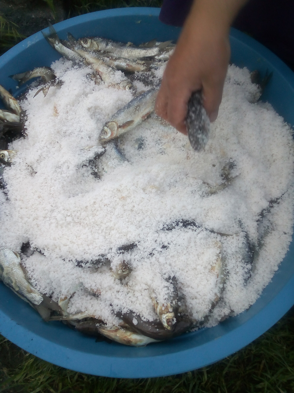 Balıkla tuzun serüveni Tuzlu balık (5).jpg