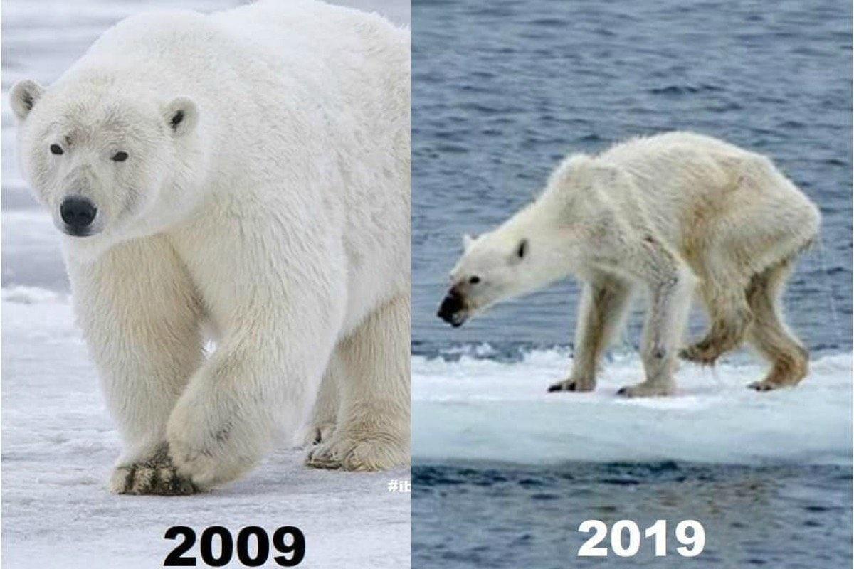 Hayvanlar 10 year challenge